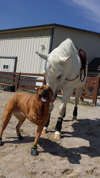 Neka & horsey friend june 2015